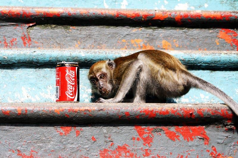 Fronte della scimmia per coca-cola immagini stock