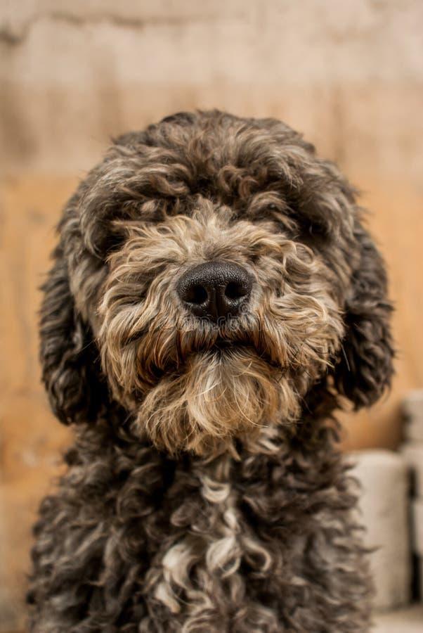 Fronte di amore uguale al cucciolo fotografia stock