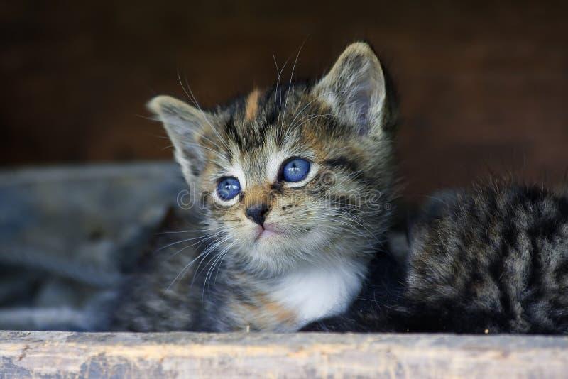Fronte dolce del gattino fotografia stock libera da diritti