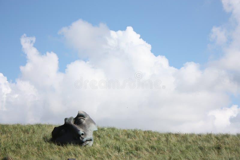 Fronte sull'erba fotografia stock libera da diritti