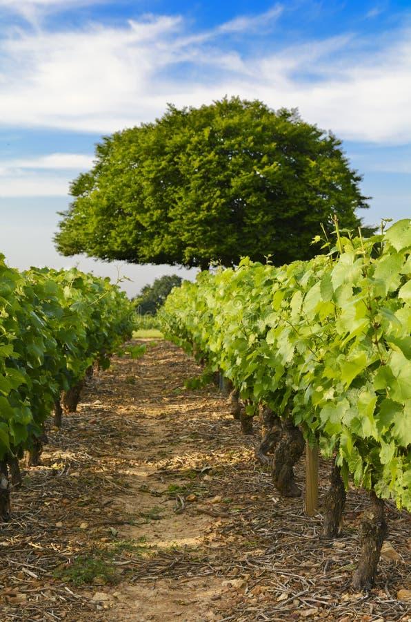 Frontenas村庄,博若莱红葡萄酒,法国葡萄园  库存照片