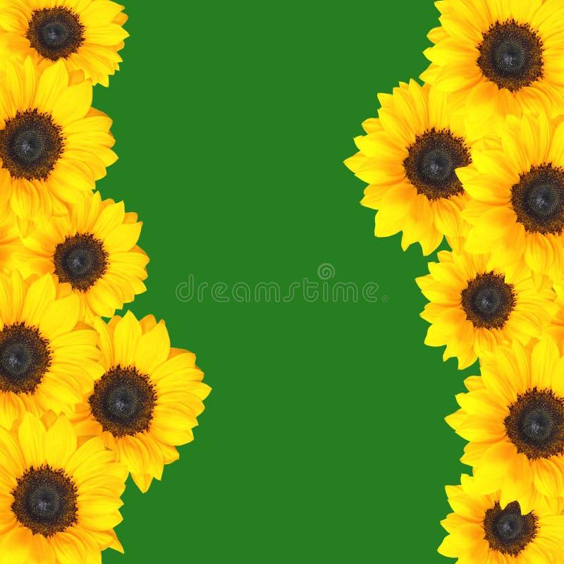 Frontera amarilla de los girasoles foto de archivo libre de regalías