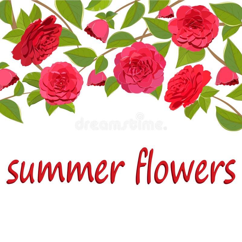 Frontera brillante de ramas con las flores rojas de la camelia en el fondo blanco stock de ilustración