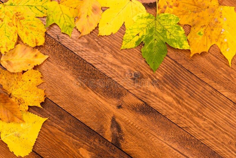 Frontera con las hojas coloridas en la caída imagenes de archivo