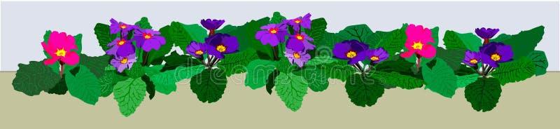 Frontera de la flor con las primaveras azules y rosadas ilustración del vector