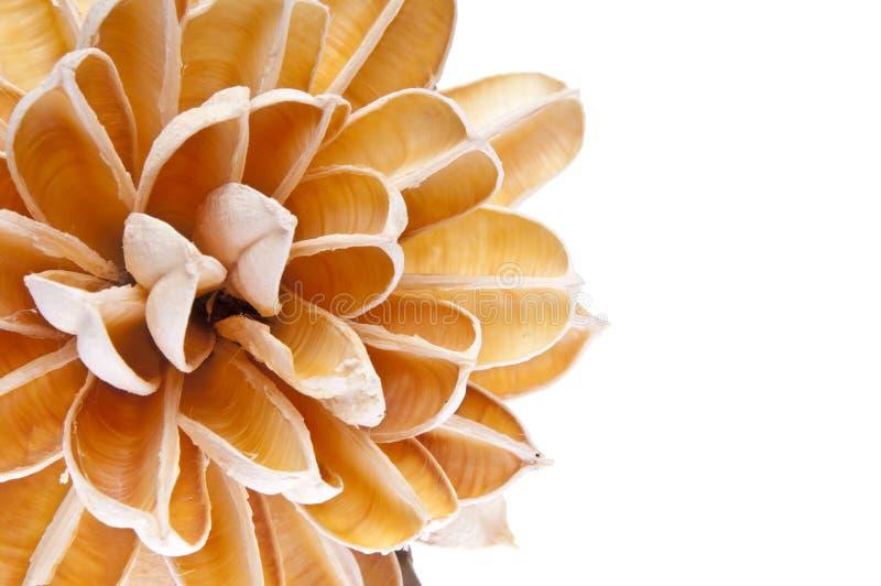 Frontera de la flor de papel fotografía de archivo libre de regalías