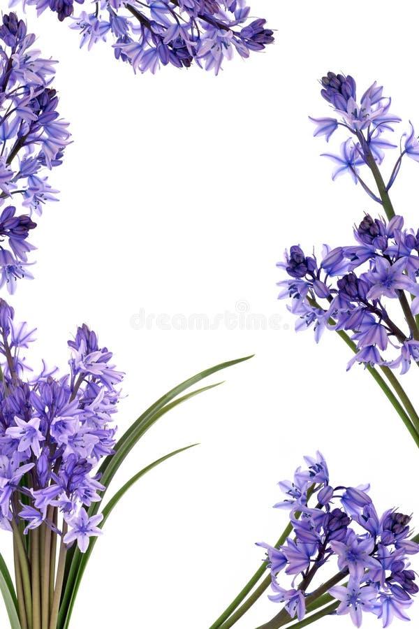 Frontera de la flor del Bluebell imágenes de archivo libres de regalías