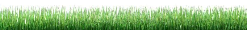 Frontera de la hierba verde