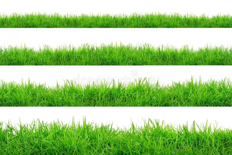 Frontera de la hierba verde aislada en el fondo blanco fotografía de archivo