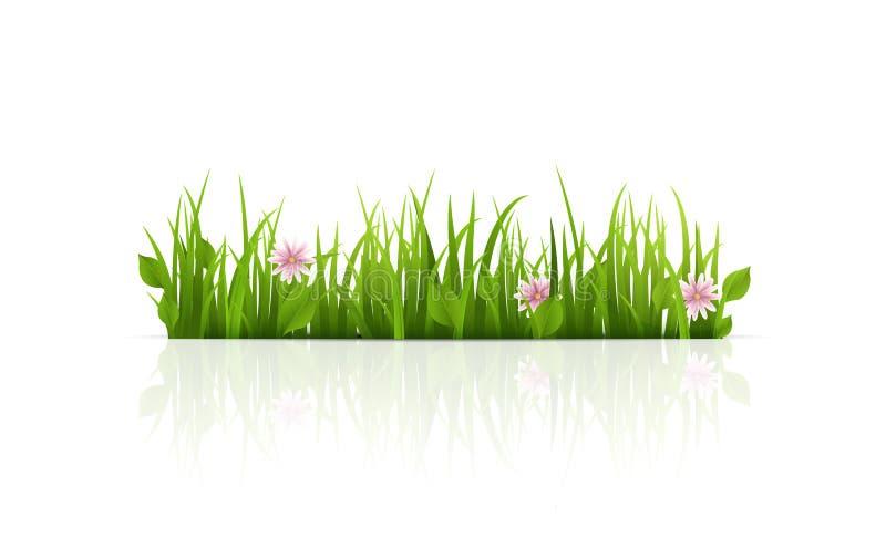 Frontera de la hierba verde Aislado Ilustración del vector foto de archivo