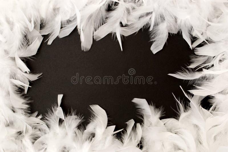 Frontera de la pluma blanca imagenes de archivo