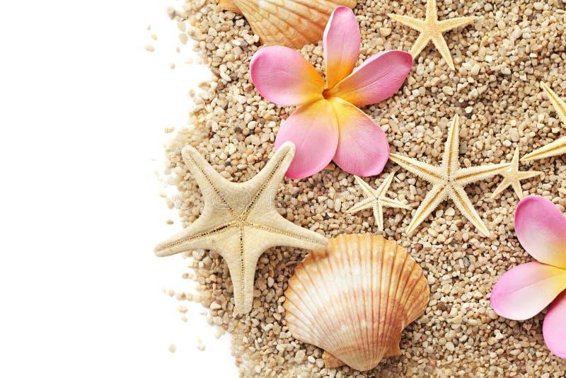 Frontera de las conchas marinas imagenes de archivo