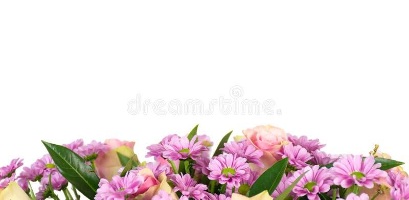 Frontera de las flores rosadas aisladas en el fondo blanco imagen de archivo