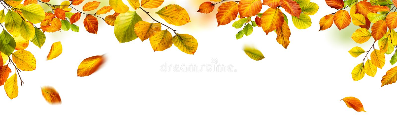 Frontera de las hojas de otoño en el fondo blanco imágenes de archivo libres de regalías