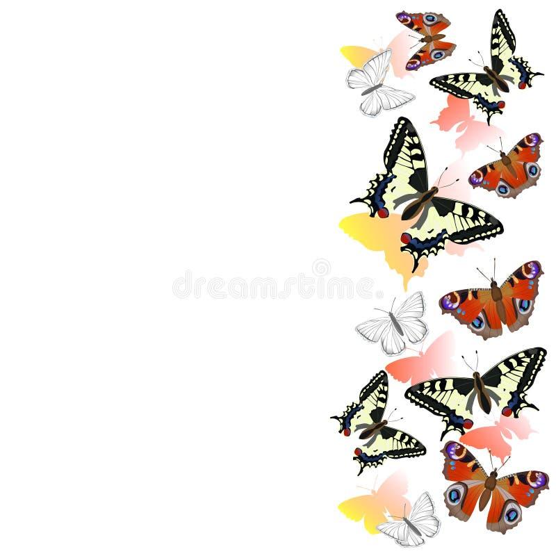 Frontera de las mariposas del swallowtail y de los ojos realistas del pavo real Elemento del dise?o Marco del vector aislado en e libre illustration