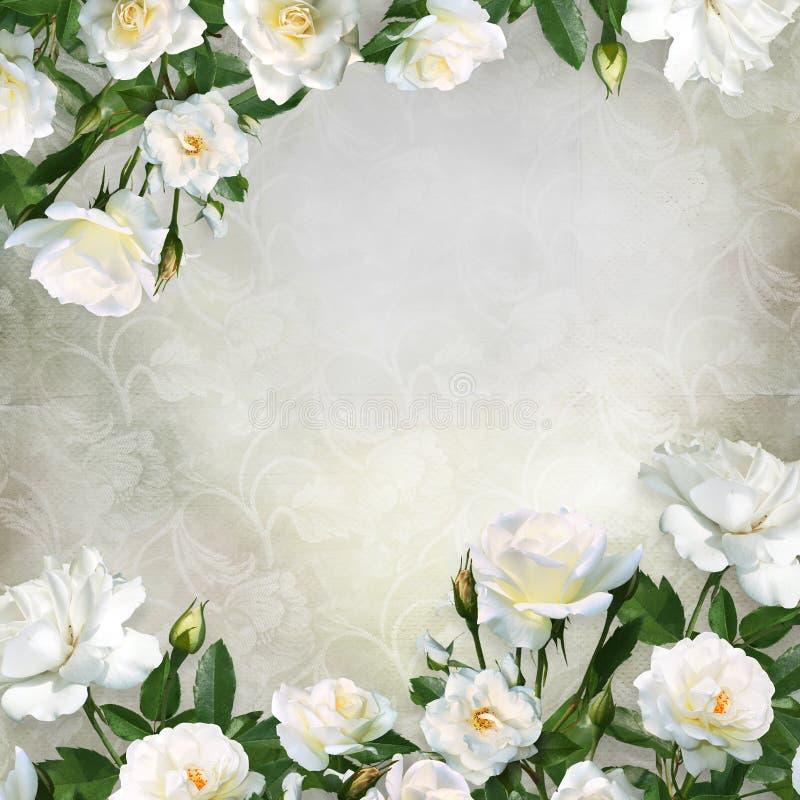 Frontera de las rosas blancas en un fondo hermoso del vintage con el espacio para el texto o la foto ilustración del vector