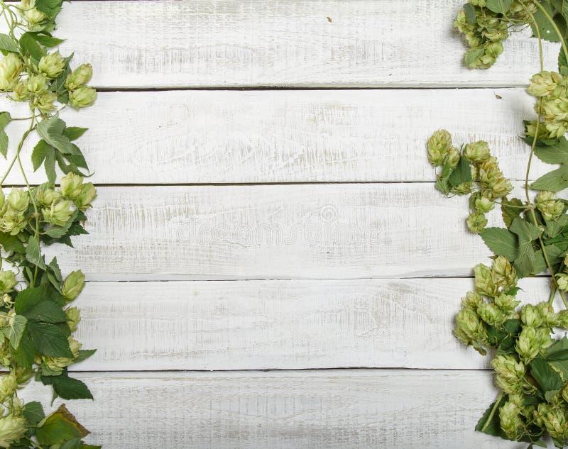 Frontera de ramas verdes del salto en el fondo de madera rústico blanco Concepto de producción de la cerveza Mofa para arriba par imágenes de archivo libres de regalías