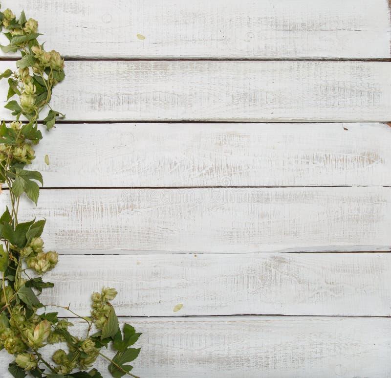 Frontera de ramas verdes del salto en el fondo de madera rústico blanco Concepto de producción de la cerveza Mofa para arriba par foto de archivo