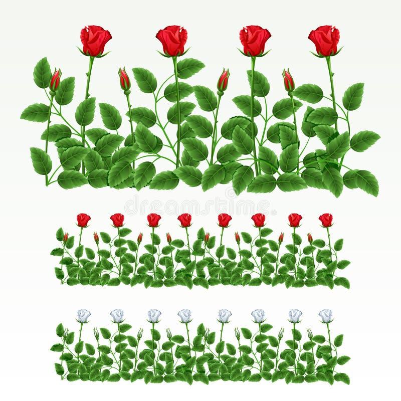 Frontera de rosas stock de ilustración