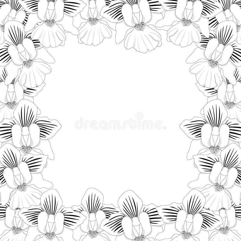Frontera de Vanda Miss Joaquim Orchid Outline aislada en el fondo blanco Ilustración del vector Flor del nacional de Singapur ilustración del vector