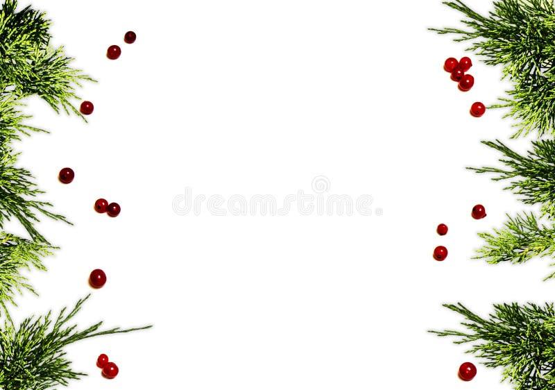 Frontera del fondo de la Navidad con el árbol de abeto imperecedero y las bayas rojas foto de archivo