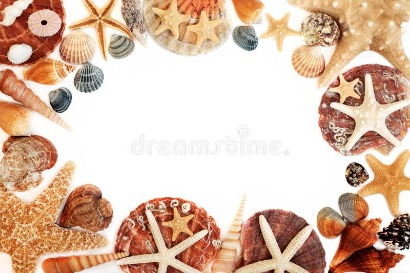 Frontera del fondo del extracto de la concha marina imagen de archivo
