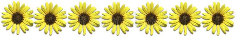 Download Frontera del girasol stock de ilustración. Ilustración de verano - 176660