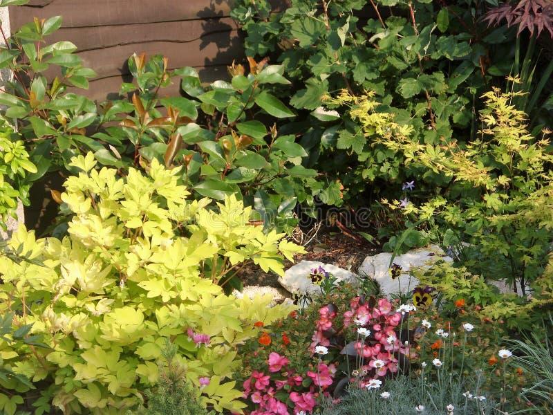 Frontera del jardín de la mezcla del follaje del fondo pequeña foto de archivo