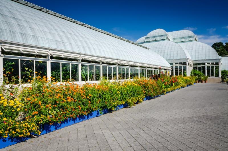Frontera del Lantana - invernadero de Haupt - jardín botánico de Nueva York imagenes de archivo