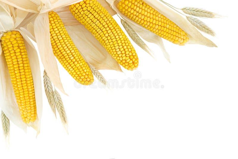 Frontera del maíz y del trigo en blanco imágenes de archivo libres de regalías
