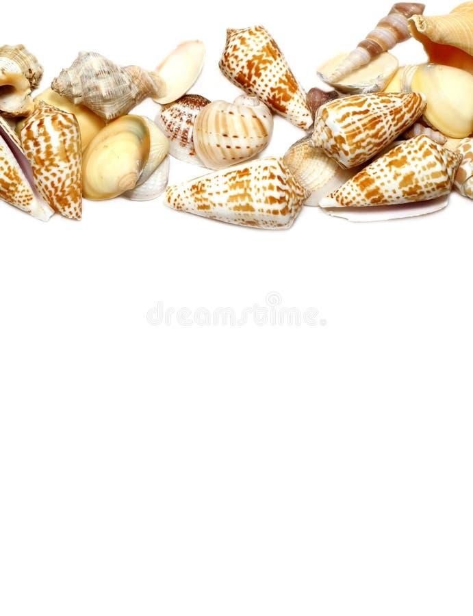 Frontera del Seashell fotografía de archivo