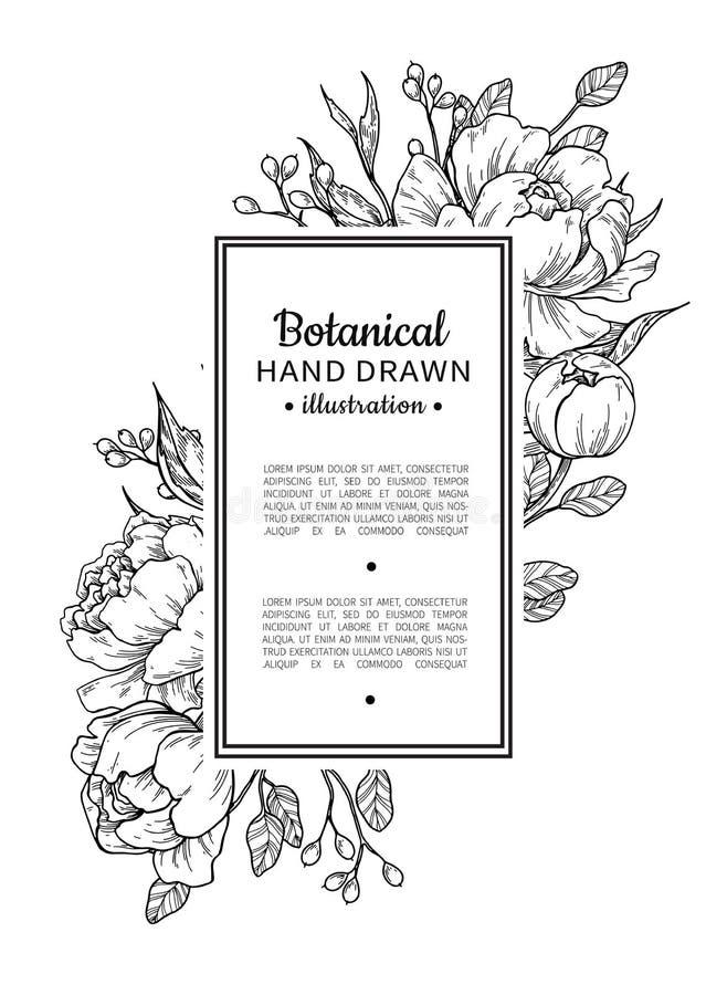 Frontera del vintage de la flor Peonía del vector y dibujo botánico de las rosas ilustración del vector