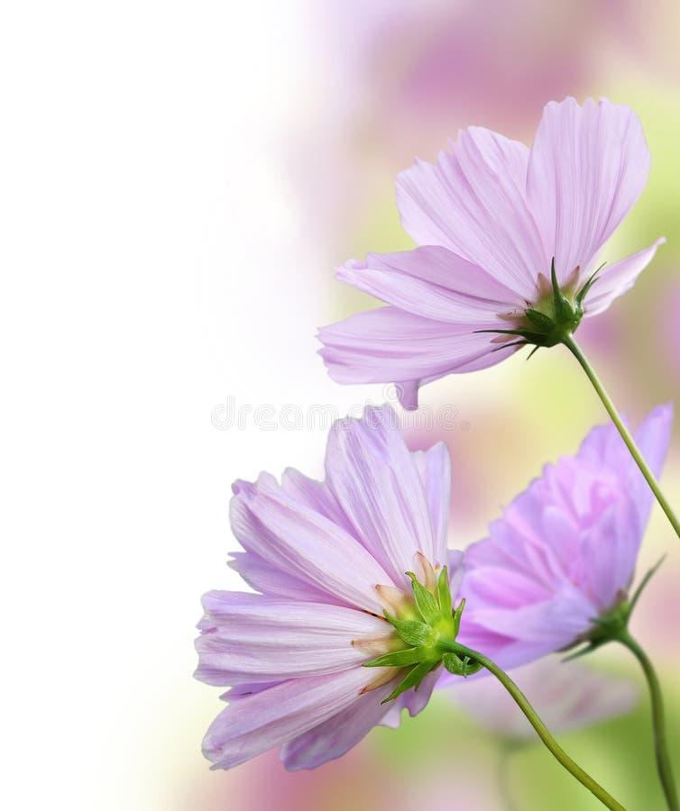 Frontera floral hermosa imágenes de archivo libres de regalías