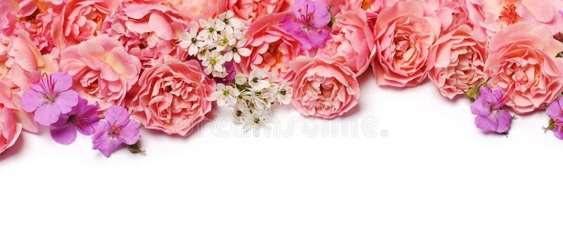 Frontera floral hermosa fotografía de archivo libre de regalías
