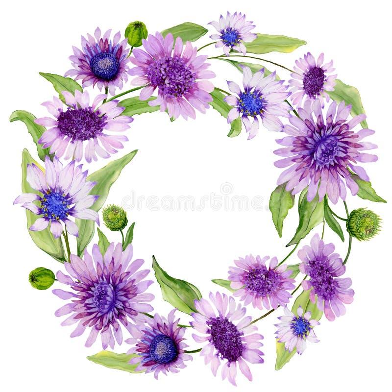 Frontera floral redonda La margarita azul y púrpura hermosa florece con las hojas verdes en el fondo blanco Pintura de la acuarel stock de ilustración