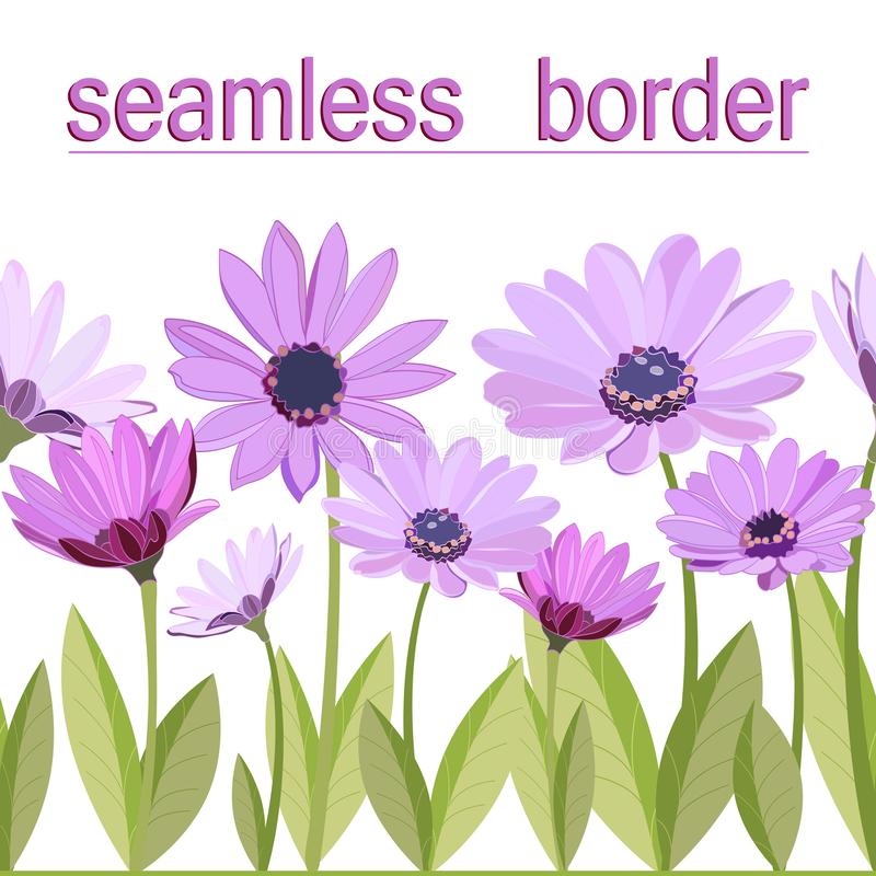 Frontera inconsútil floral delicada de las margaritas hermosas de la lila en troncos verdes con las hojas stock de ilustración