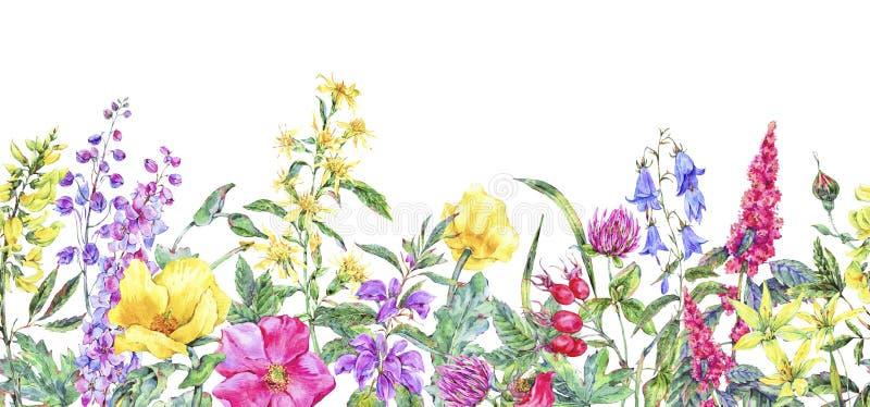 Frontera inconsútil floral medicinal del verano de la acuarela, planta de las flores salvajes stock de ilustración