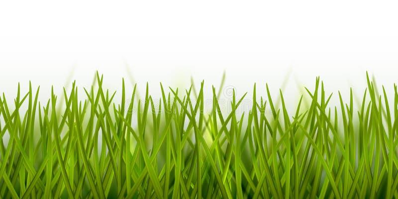 Frontera inconsútil realista o marco de la hierba verde del vector aislado en el fondo blanco - naturaleza, ecología, ambiente, c ilustración del vector