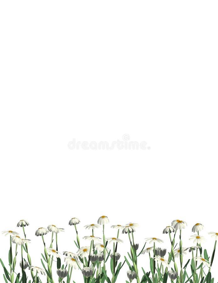 Frontera inferior de las margaritas - carta imagen de archivo