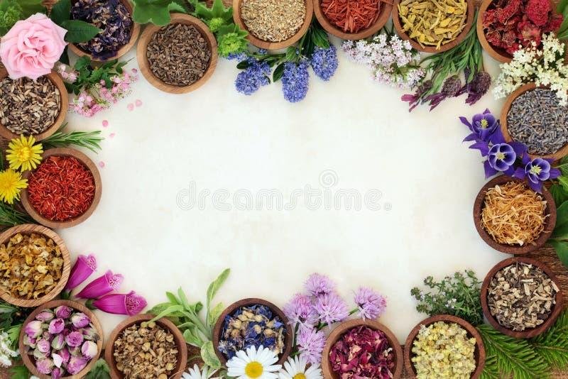 Frontera medicinal de la hierba y de la flor fotografía de archivo libre de regalías