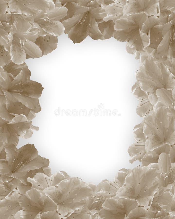 Frontera monocromática de las flores stock de ilustración