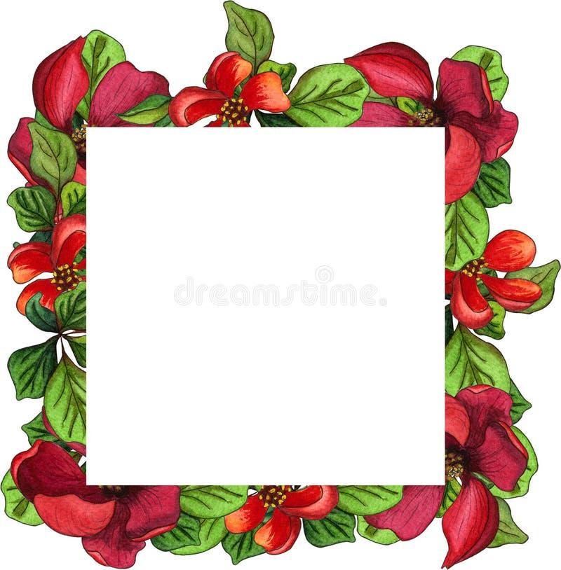 Frontera o marco hecho de las flores florecientes rojas del membrillo japonés y de las hojas verdes Ejemplo floral de la acuarela stock de ilustración