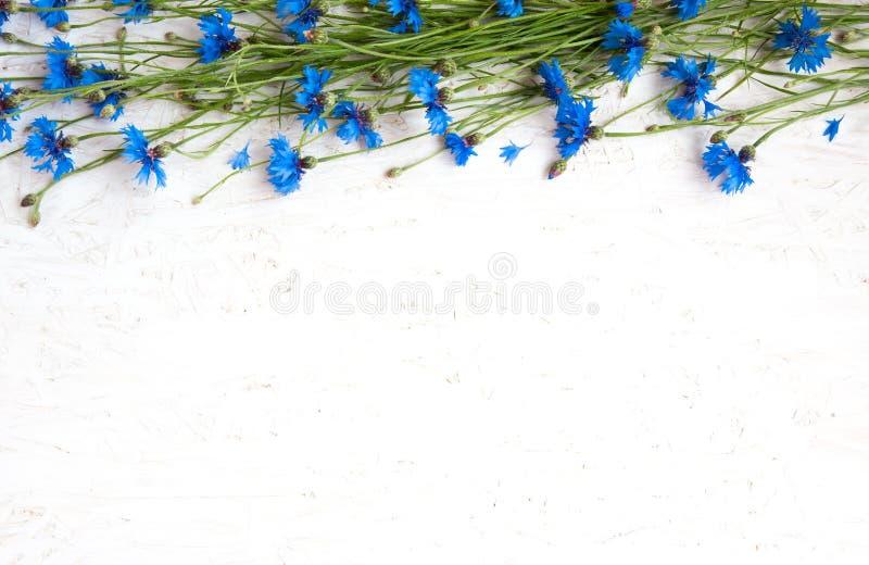 Frontera rústica del aciano azul en fondo del blanco del grunge fotografía de archivo libre de regalías
