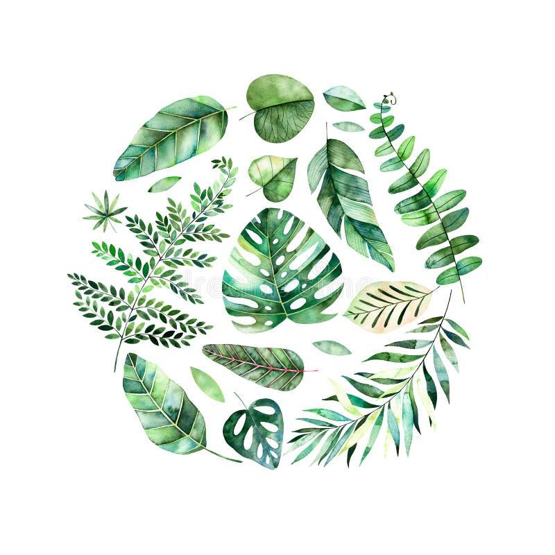 Frontera redonda del marco de la acuarela colorida con las hojas tropicales coloridas libre illustration