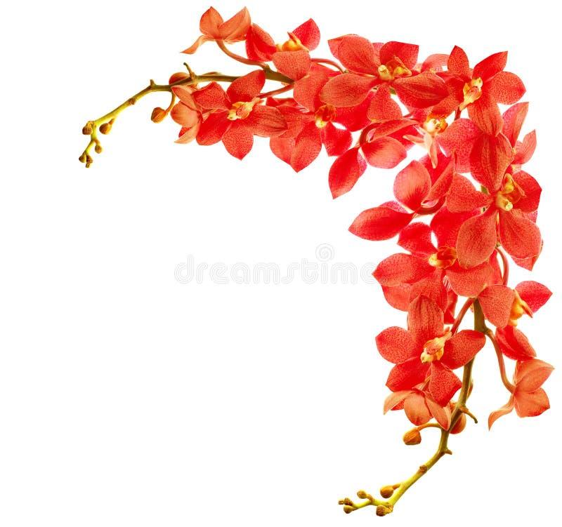 Frontera roja de la orquídea fotos de archivo