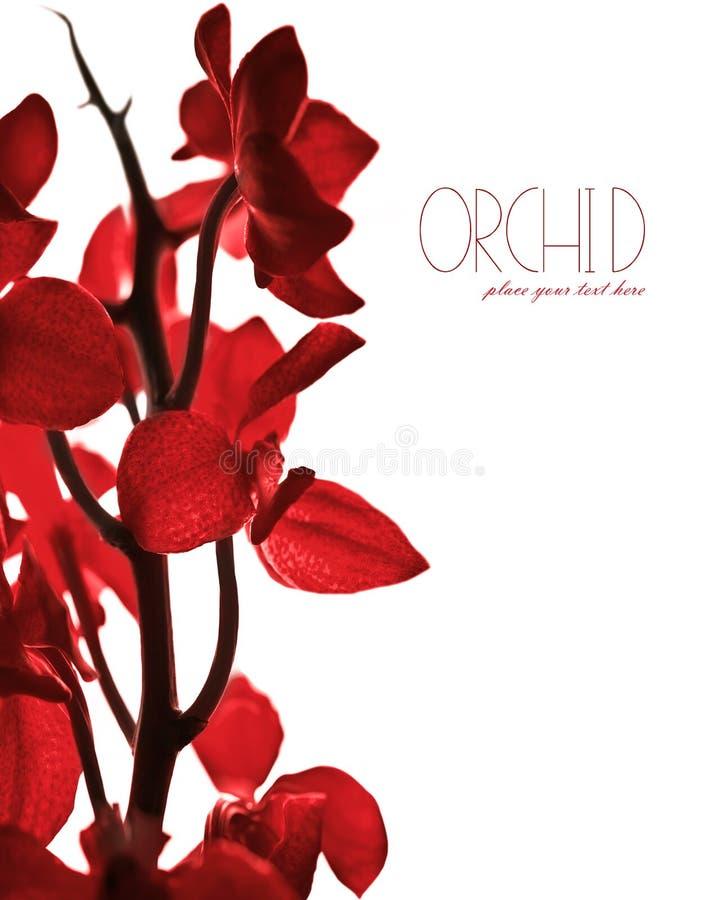 Frontera roja de la orquídea foto de archivo libre de regalías