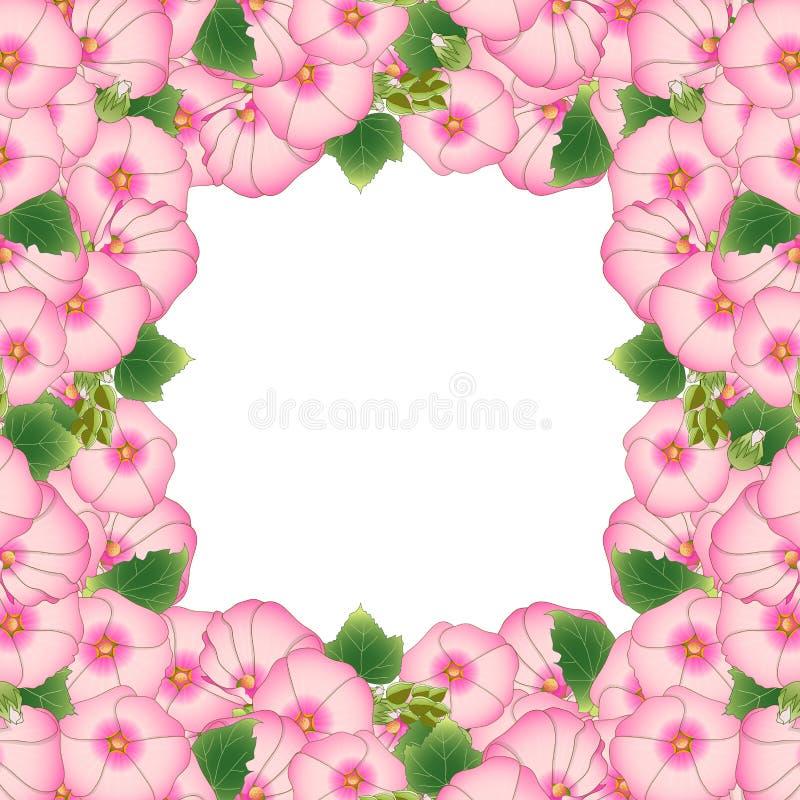 Frontera rosada de Rosea del Alcea - malvarrosas, Aoi en el Malvaceae de la familia de malva Aislado en el fondo blanco Ilustraci ilustración del vector