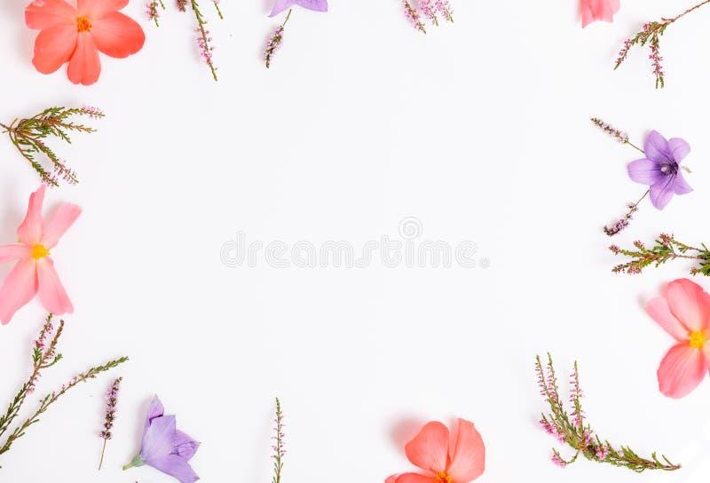Frontera superior floral hermosa Arreglo floral de las flores violetas y anaranjadas en el fondo blanco aislado para el dise?o foto de archivo libre de regalías