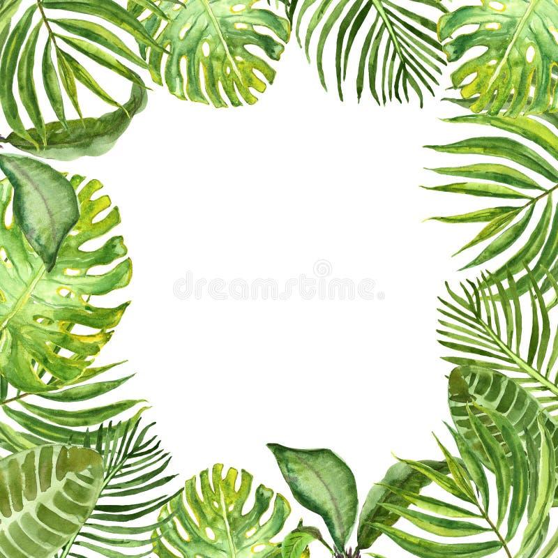 Frontera tropical de las hojas y de las plantas del verde de la acuarela Verdor exótico y follaje del verano pintado a mano en el stock de ilustración