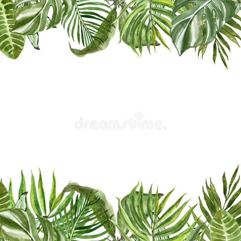 Frontera tropical de las hojas y de las plantas de la acuarela Verdor exótico y follaje del verano pintado a mano en el fondo bla libre illustration